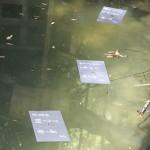 八重垣神社・鏡の池での占いは・・・